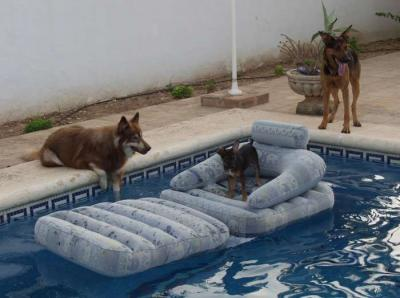 ein tag mit hunden am pool kleiner hund ahoi. Black Bedroom Furniture Sets. Home Design Ideas