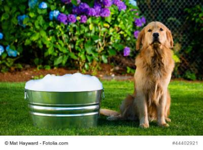 Hundebadewanne - 44402921 - Dog Bath © Mat Hayward